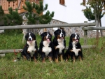 4dogs 1
