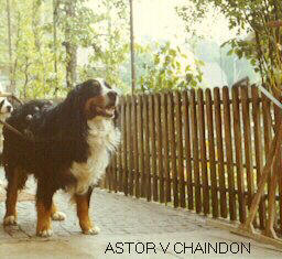 Astor v Chaindon