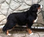 brenda_profil2.thumbnail.jpg